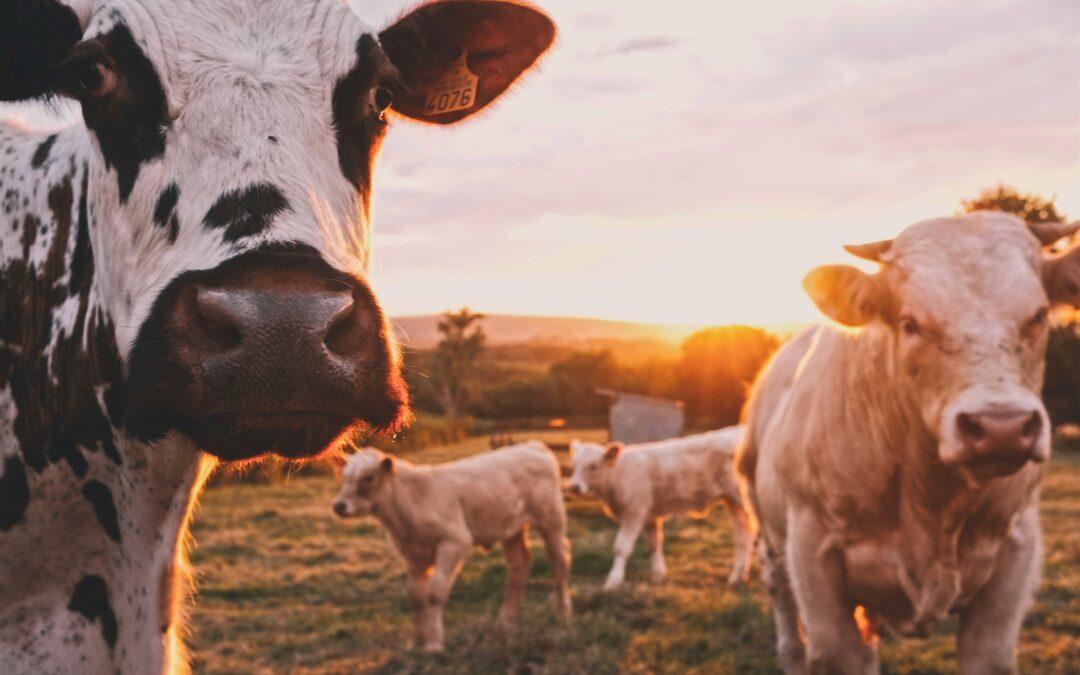 Mensch, Tier und Natur wirken zusammen – Marketing für Demeter im Norden